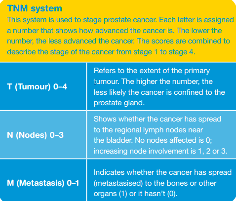 Prostate Cancer Tnm Stage Diagram